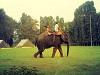 FBM_Elephant-300x225